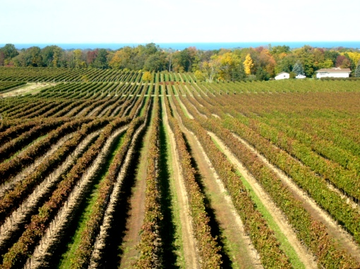 The view from Flatrock Cellars, Jordan, Ontario - October 11, 2008