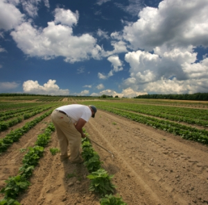 A farmer tends to his crops