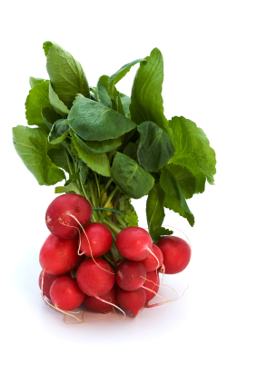 bundled radish isolated